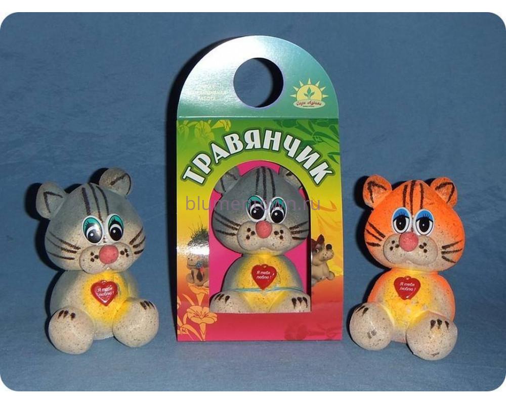 Травянчик  «Кот» (фото,инструкция,как ухаживать)